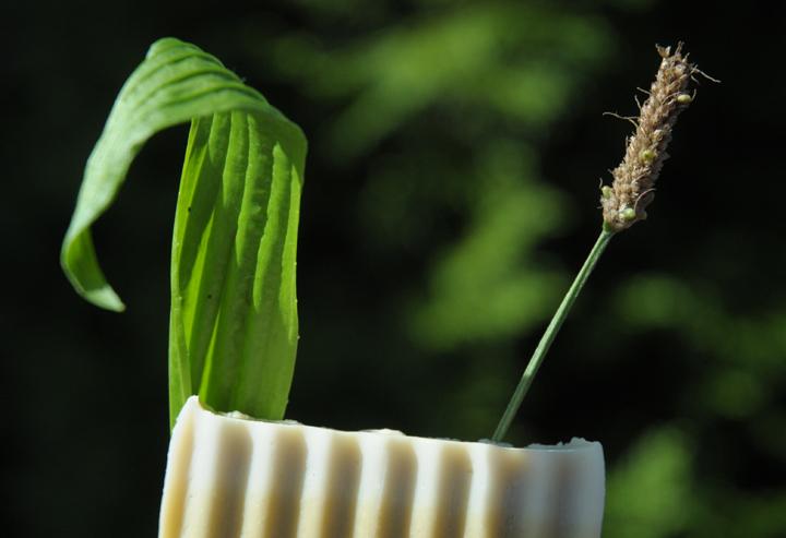 Bio-Olivenseife mit Spitzwegerich & Heilkreide