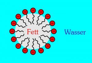Die Mizelle: Die wasserlöslichen Seifenmoleküle umschliessen ein Fettröpfchen.
